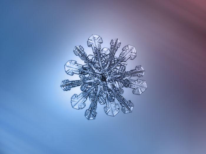 Alexey Kljatov: снежинки, снятые в режиме макросъемки