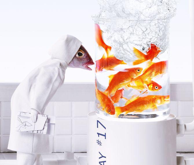 Рыбные коллажи от Anne-Catherine Becker-Echivard