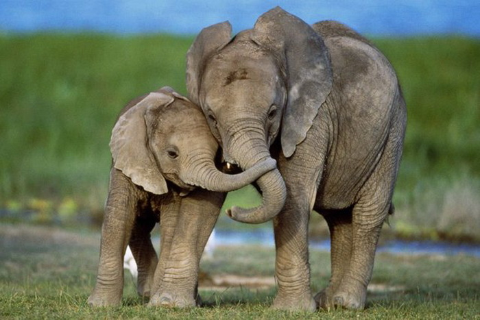 Слониха и слоненок.