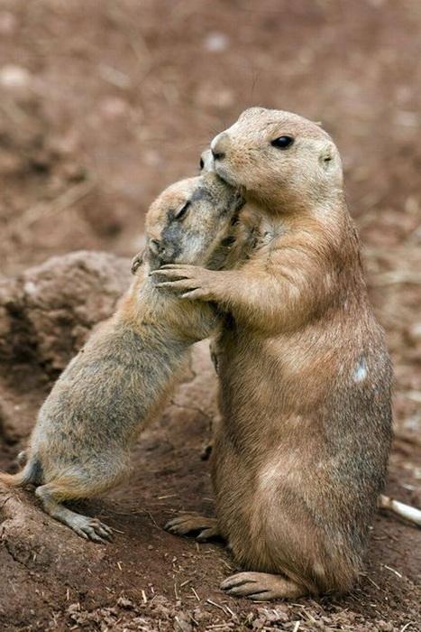 Материнский инстинкт у животных.