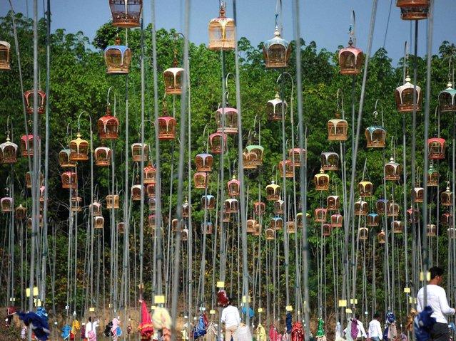 1000 птиц на конкурсе в Таиланде