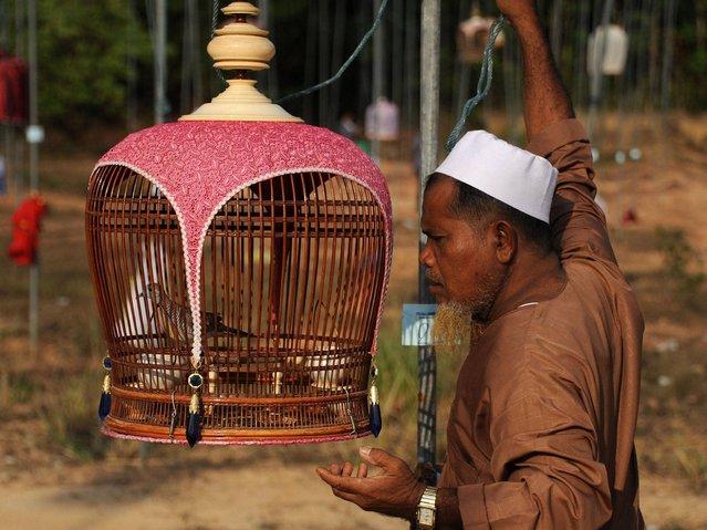 Конкурс на лучшую певчую птицу в Таиланде
