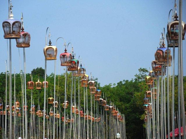 Конкурс в Таиланде на лучшую певчую птицу