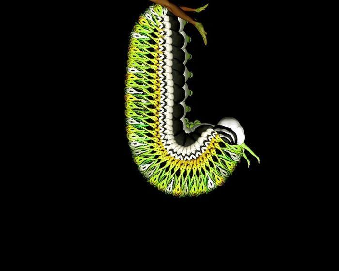 гусеница из человеческих тел