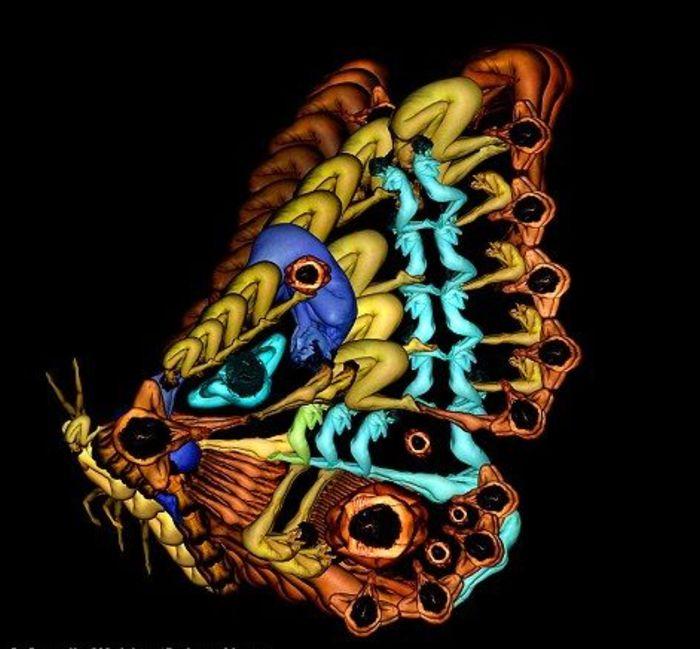 бабочка из сплетенных человеческих тел