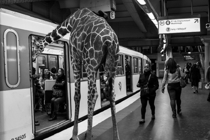 Дикие звери в метро.