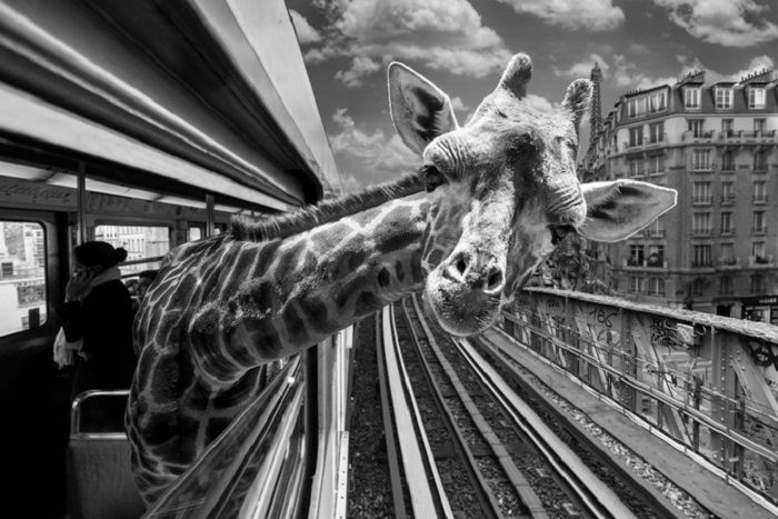 Жираф в метро.