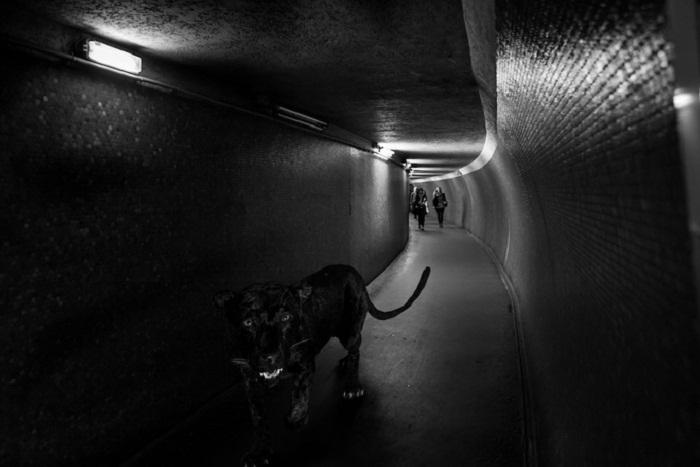 Пантера в метро.