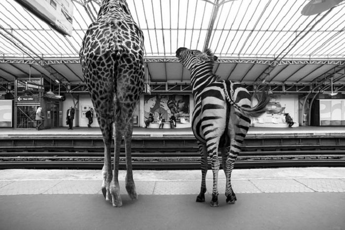 Звери в ожидании поезда.