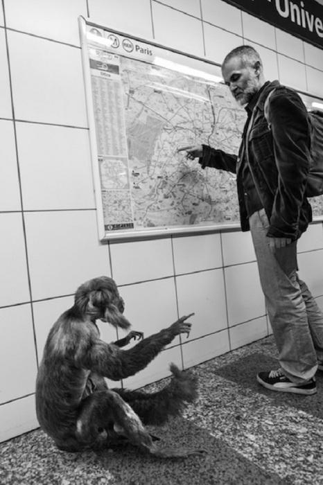 Animétro: дикие звери в столичном метро.