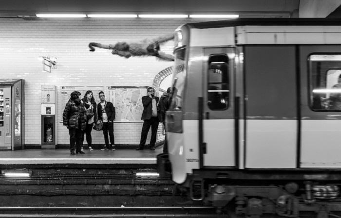 Обезьяна в метро.