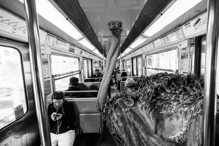 Звери в метро.