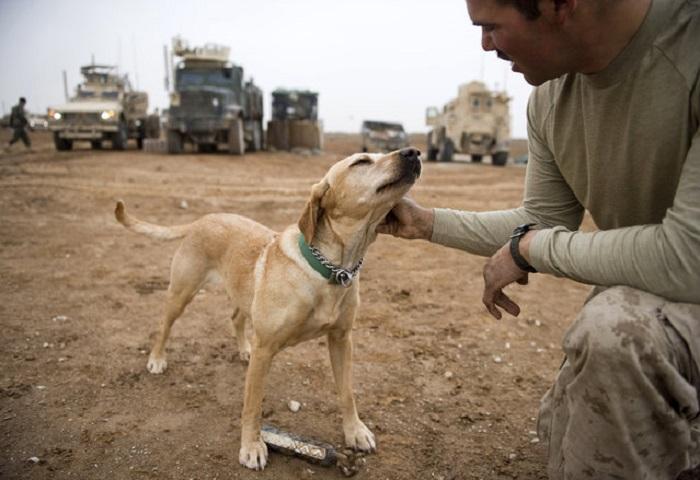 Собаки на службе тоже любят ласку.