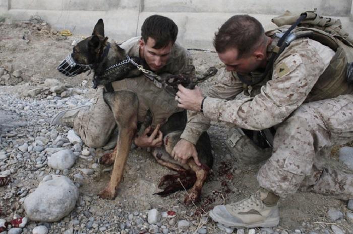 Раненый пес.
