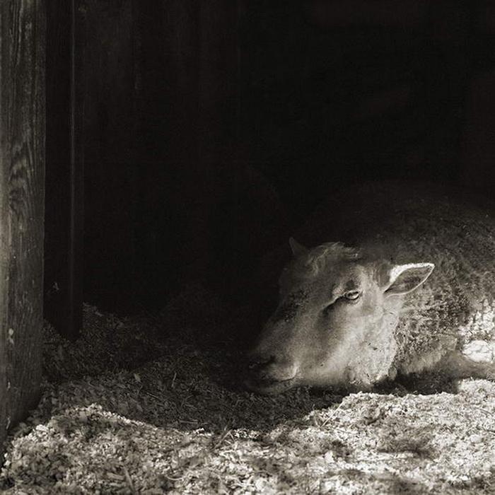 фотопроект Isa Leshko: старые животные