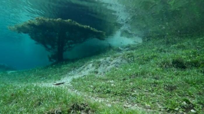 Подводная прогулка по парку дайвера Марк Henauer