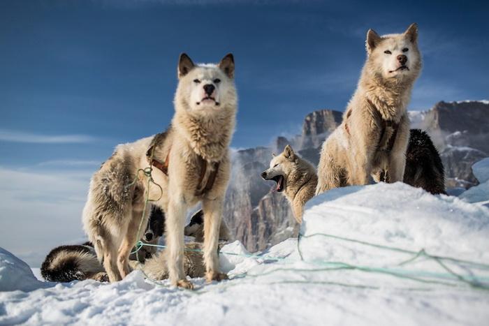 Северная Гренландия