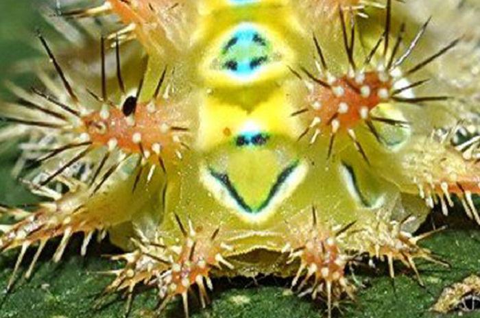 Коллекция фотографий насекомых от Darlyne Murawski.