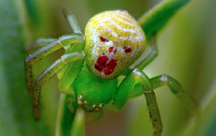 Удивительные насекомые.