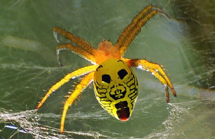 Улыбающиеся насекомые.