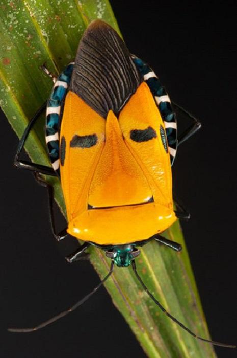 Улыбающиеся насекомые от Darlyne Murawski.
