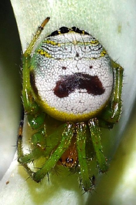 Глазастые насекомые.