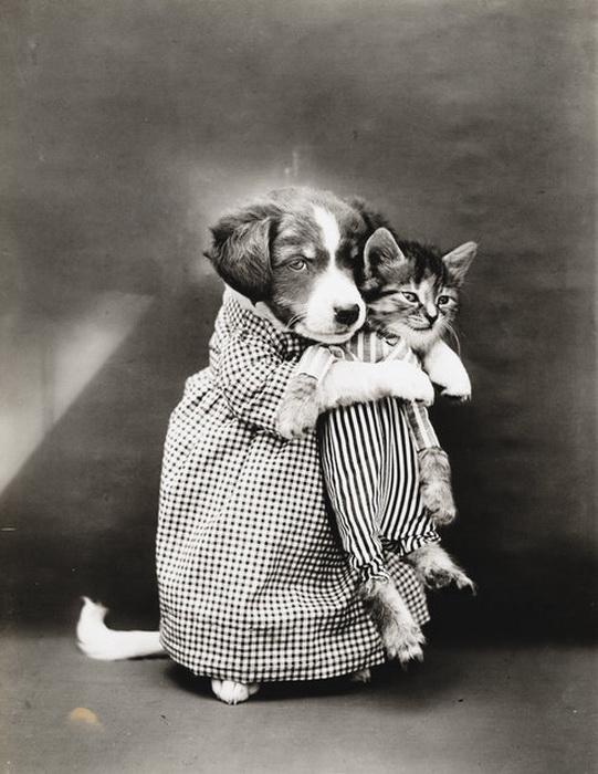 Первые фотографии в стиле Lolcat от Harry Whittier Frees.