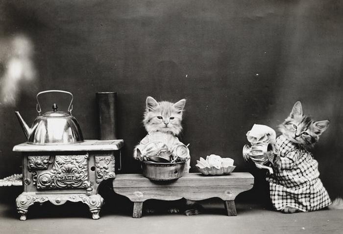 Кошки от Harry Whittier Frees.