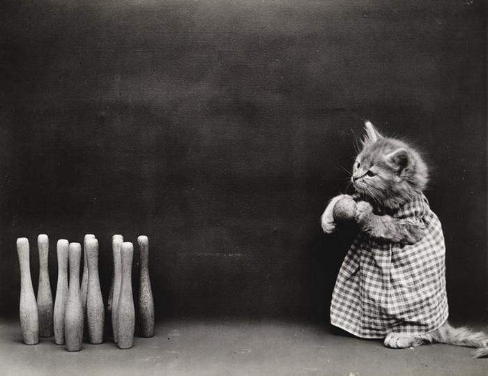 Котята в одежде людей от Harry Whittier Frees.