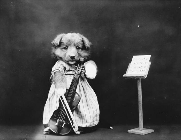 Собаки от Harry Whittier Frees.