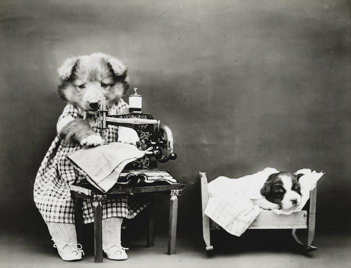 Собаки в образе людей от Harry Whittier Frees.