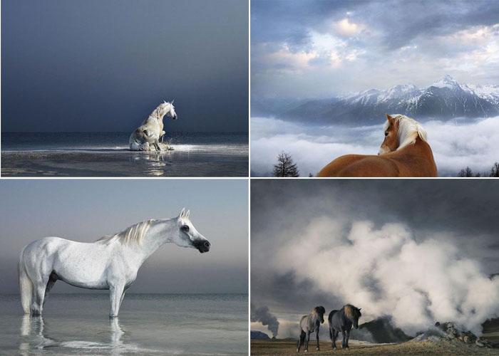 Equus: коллекция фотографий лошадей