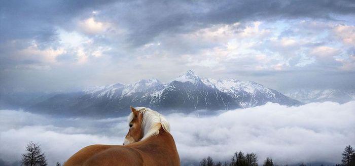 Tim Flach, лошади