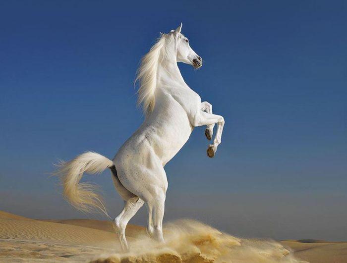 Лошади в исполнении Tim Flach