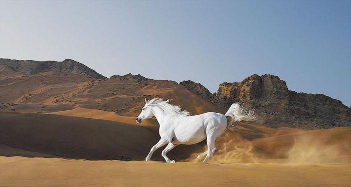 Лошадь, бегущая по степи