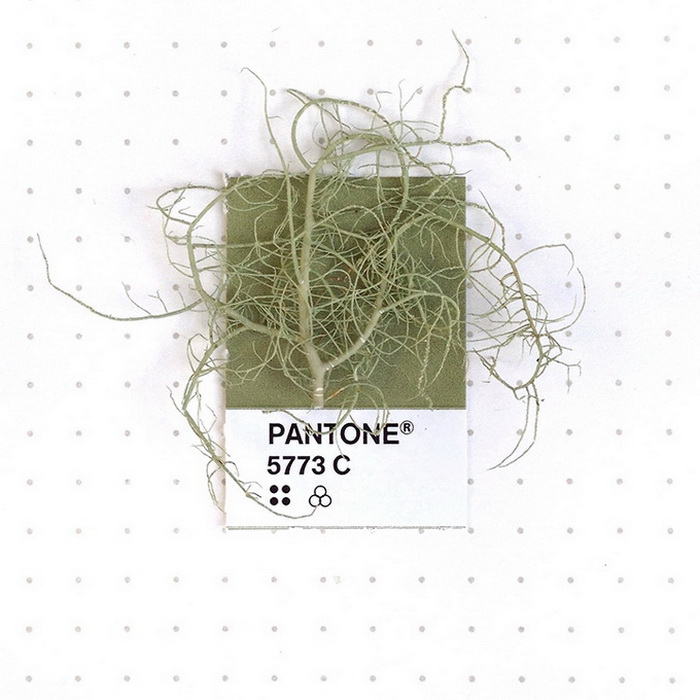 Оттенки Pantone в быту: необычные цветовые сравнения.