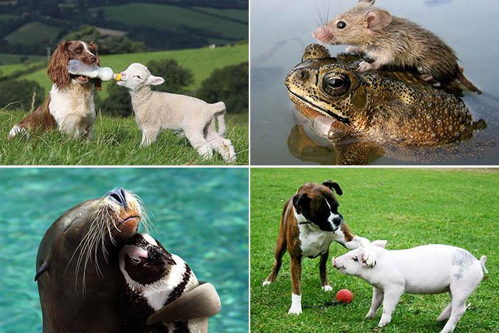 Дружба между животными на фото