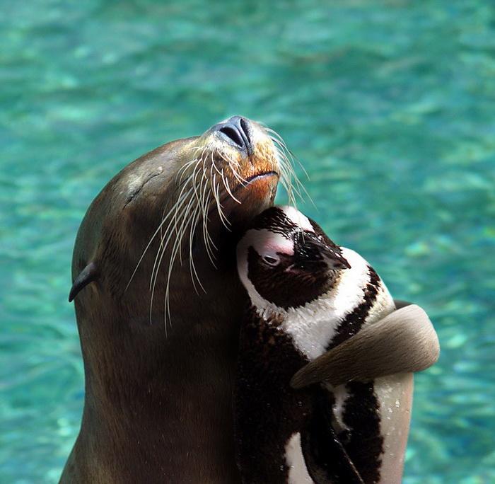 Морская дружба