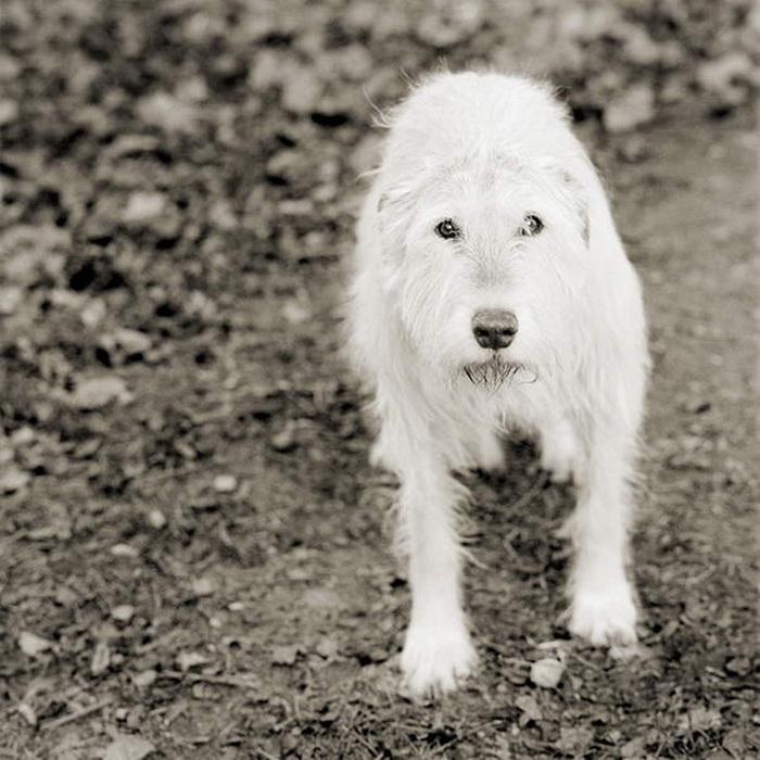 фотопроект Isa Leshko: животные в старости