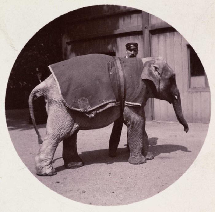 Фотографии из музея компании Kodak.
