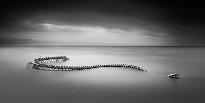 Змея на побережье реки Loire
