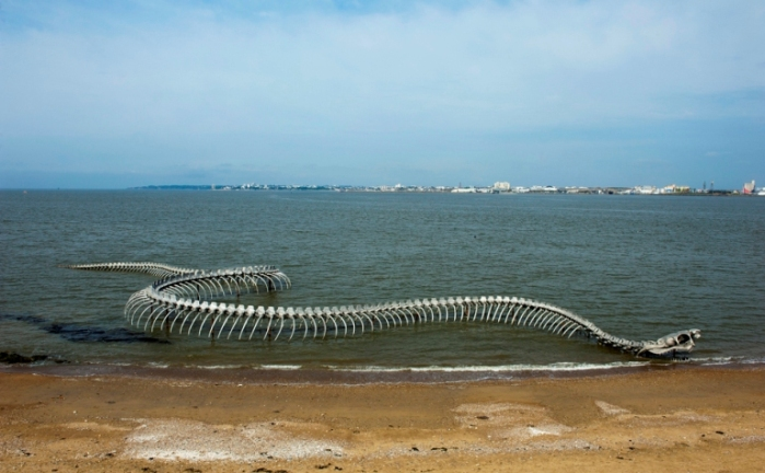 Скелет змеи на побережье реки Loire