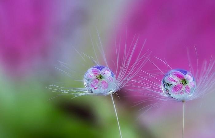 Природа глазами Miki Asai.