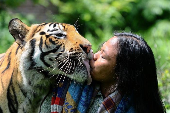 Дружба бенгальского тигра.