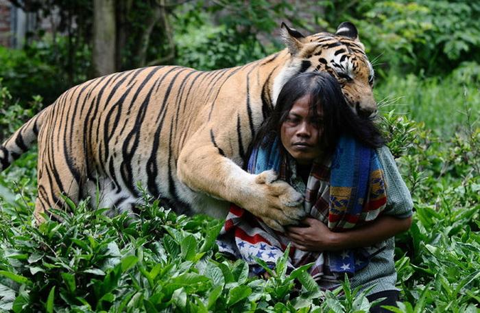 Дружба индонезийского юноши с бенгальским тигром.