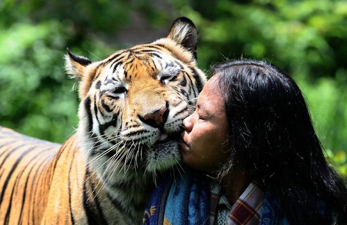 Дружба Abdullah Sholeh с тигром