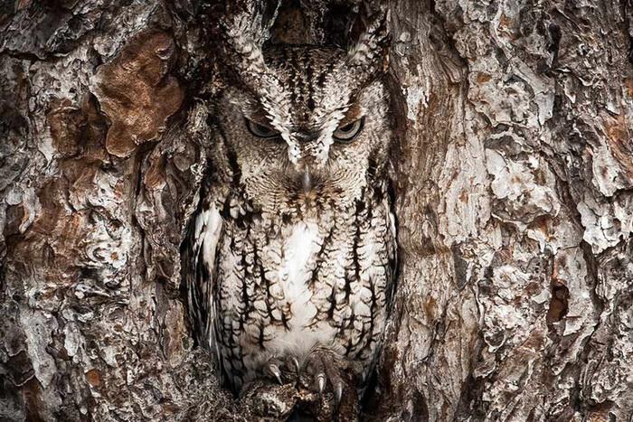 Снимок из архива National Geographic