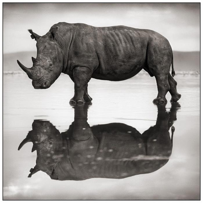 Дикая Африка глазами фотографа Nick Barratt