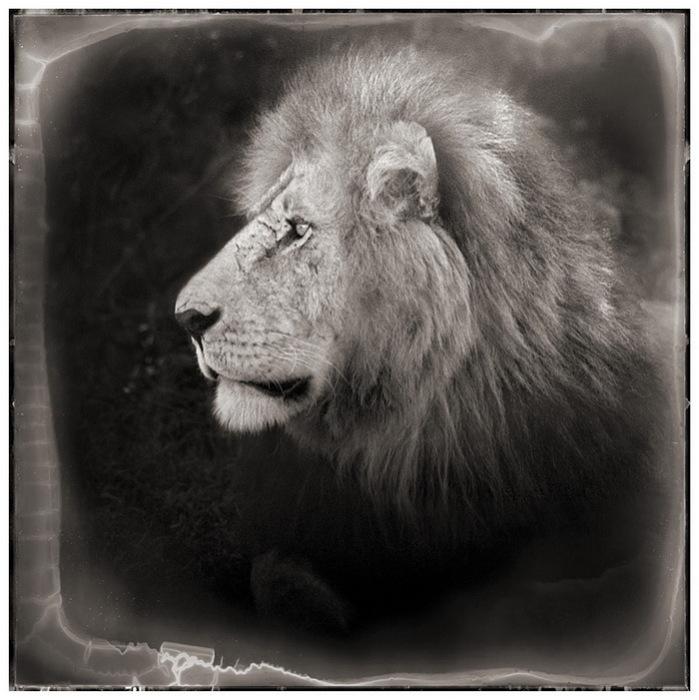 Звери дикой Африки глазами фотографа Nick Barratt