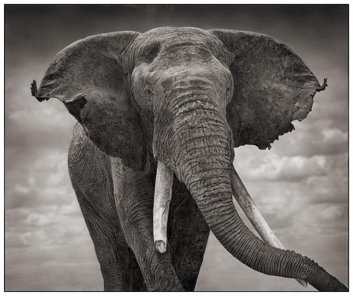 Слон, фотограф Nick Barratt
